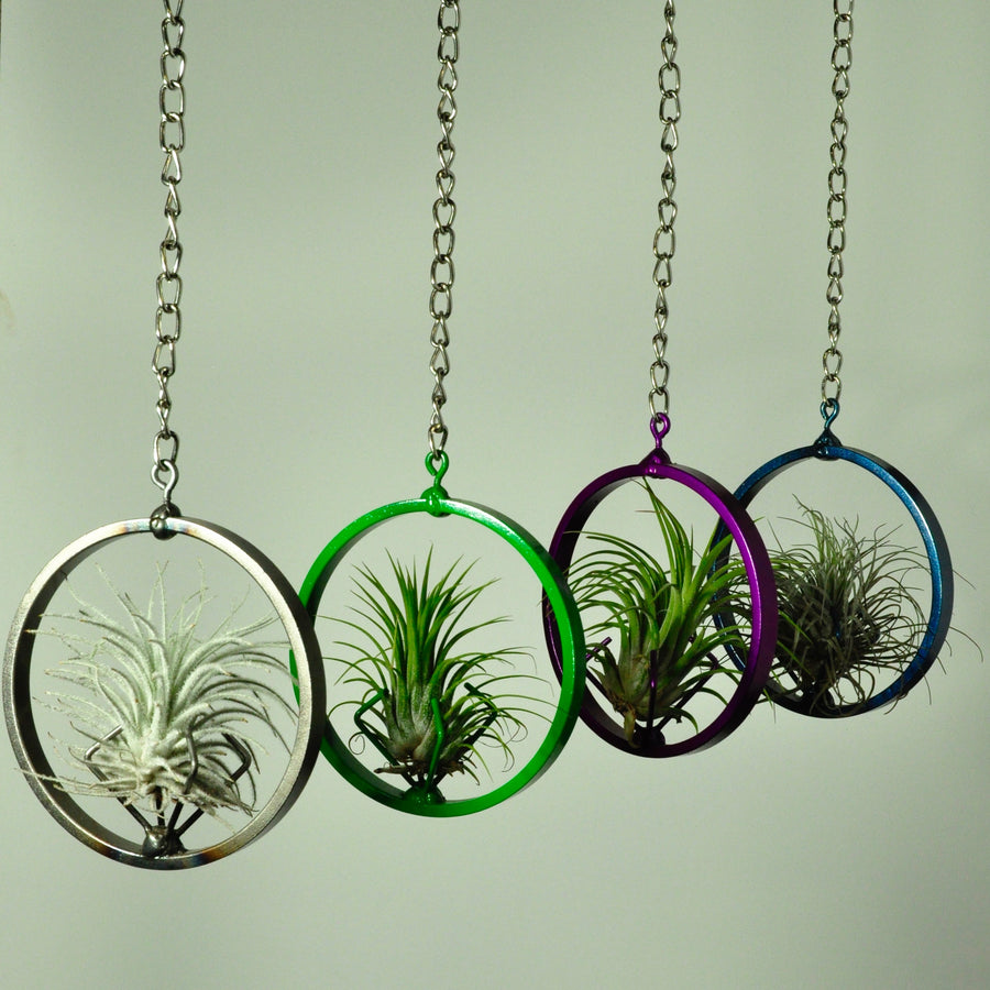 hanging air plant holder tillandsia display