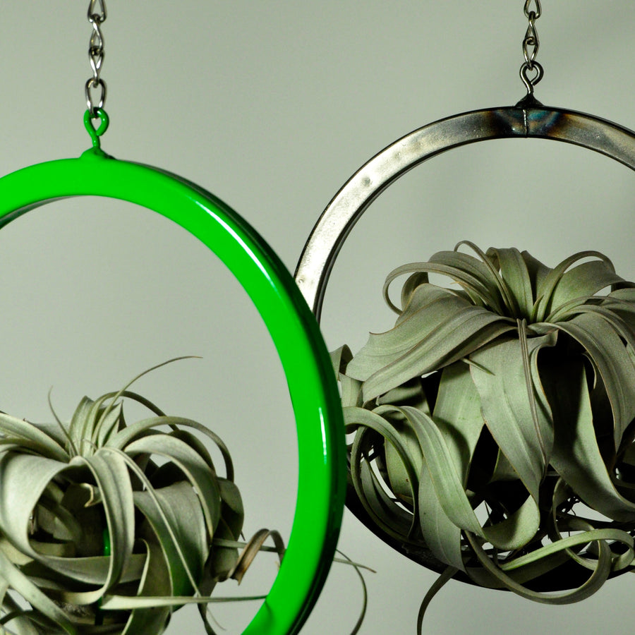 hanging air plant holder metal display large circle metal green indoor plants