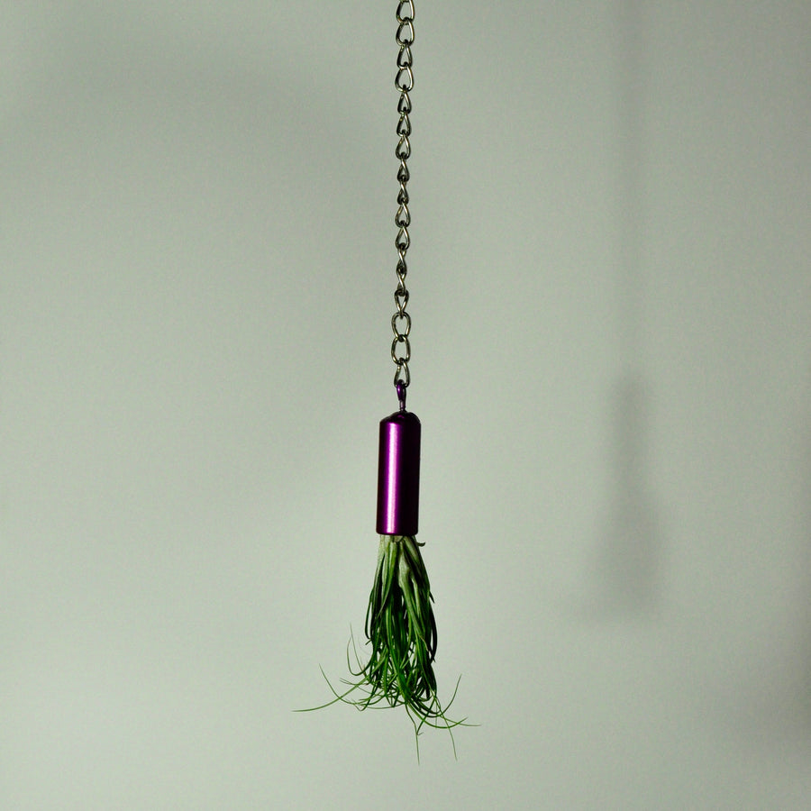 hanging-air-plant-holder-indoor-plant-mount