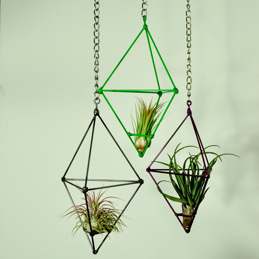 hanging plants air plant display metal prism indoor vertical garden tillandsia