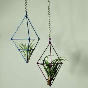 hanging plants air plant display metal prism indoor vertical garden blue purple tillandsia