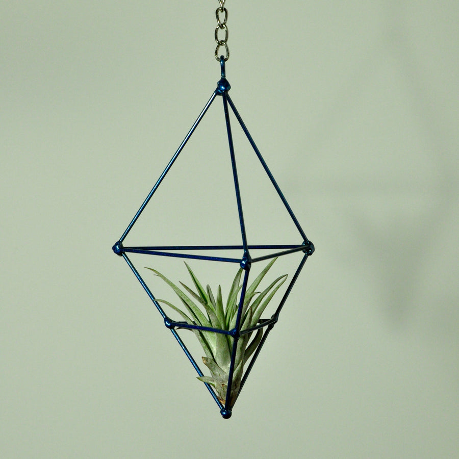 hanging air plant display metal prism indoor vertical garden blue