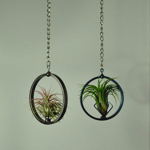 hanging air plant holder metal steel blue indoor plant display