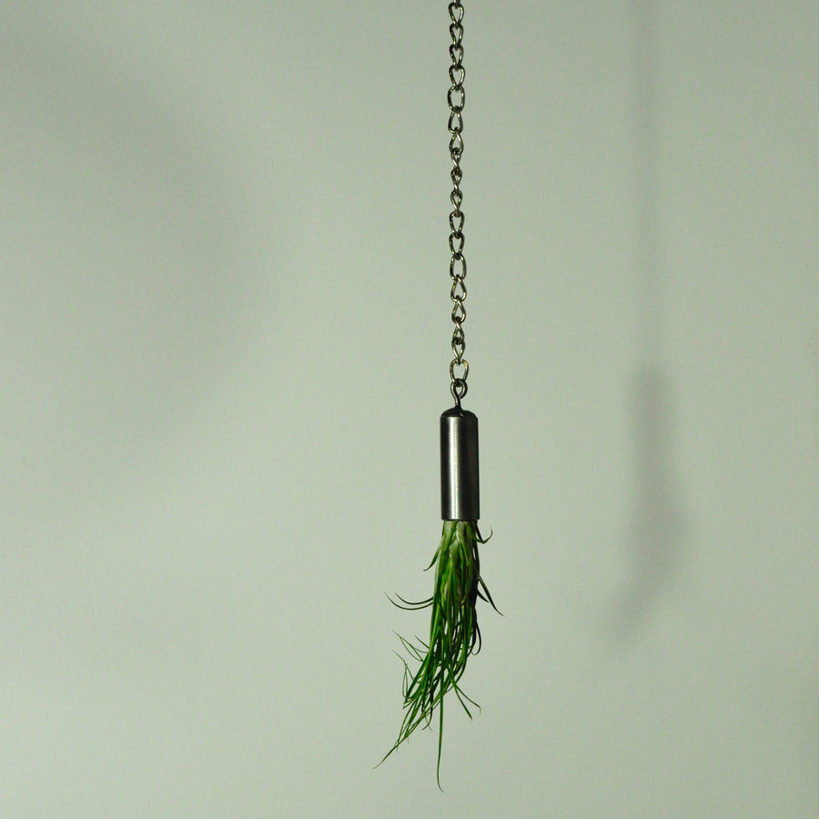 hanging plants metal air plant holder indoor garden