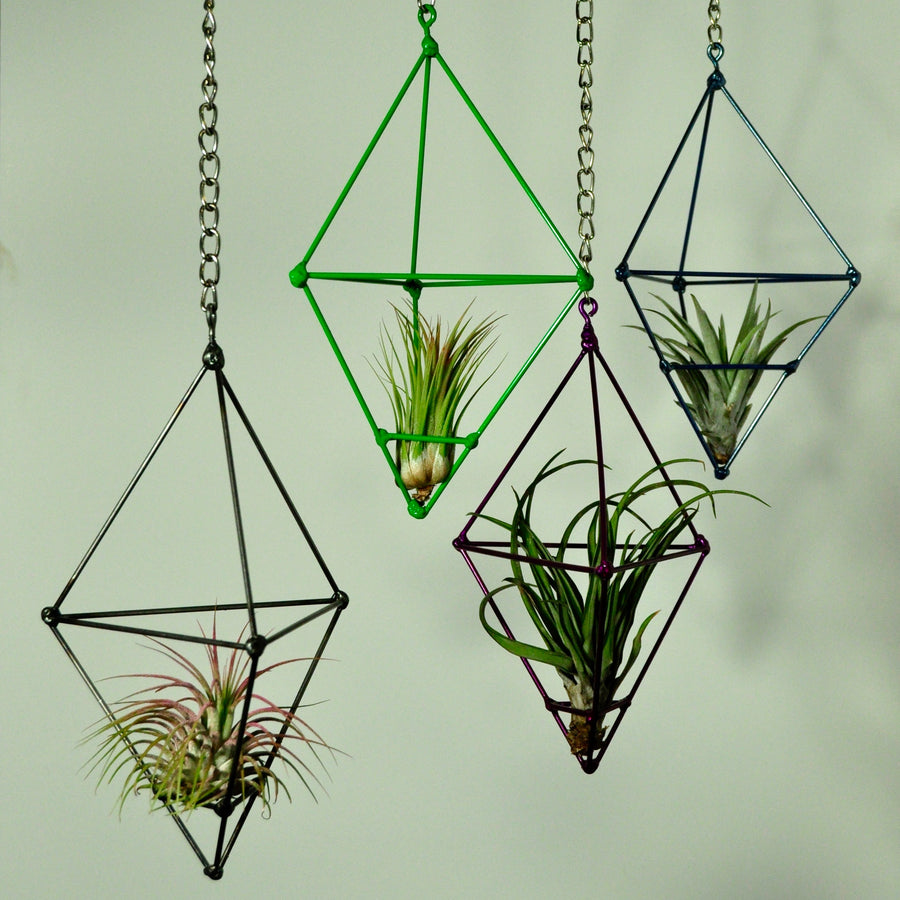 hanging air plants metal prism display indoor plants