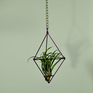 hanging air plant display metal prism indoor vertical garden purple