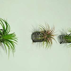 metal spring air plant holder wall mounted