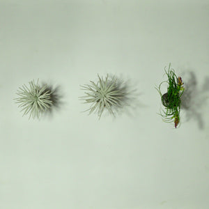 air plant holder wall mounted metal spring