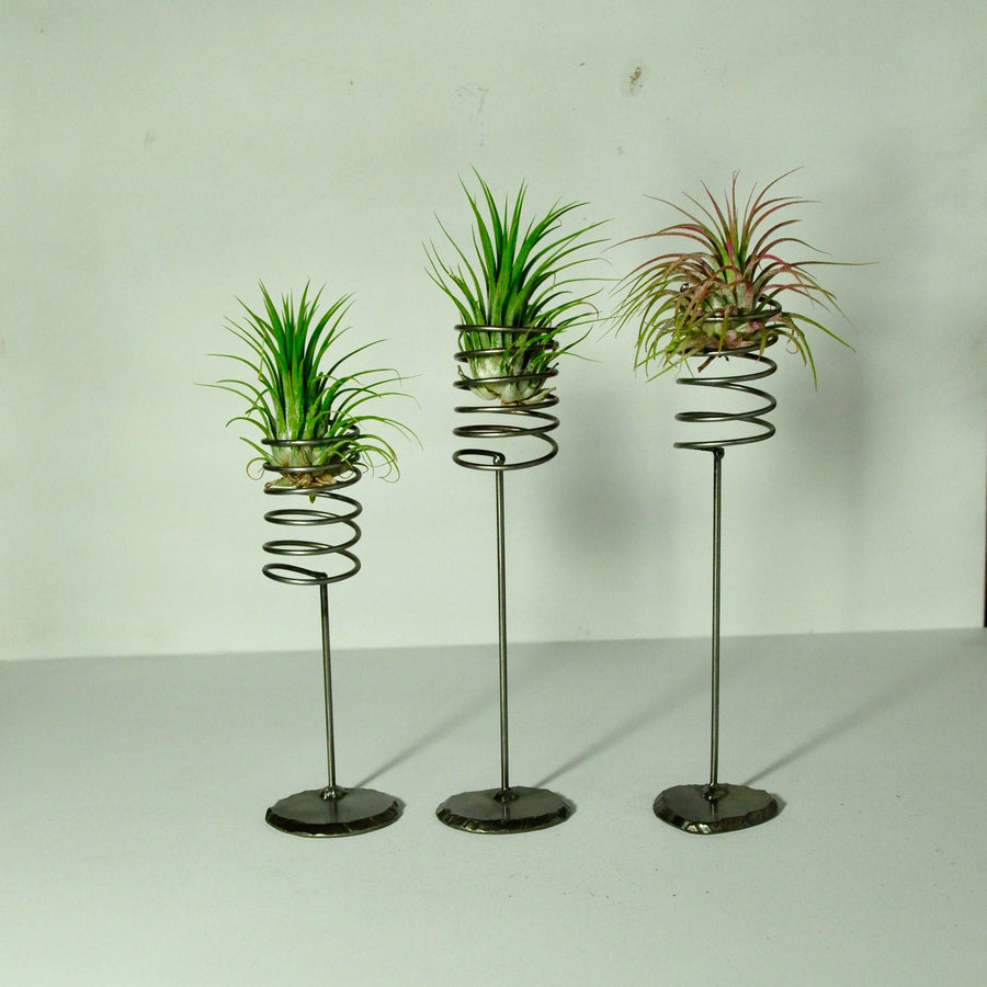 air plant ionantha guatemala pink metal spring display stands