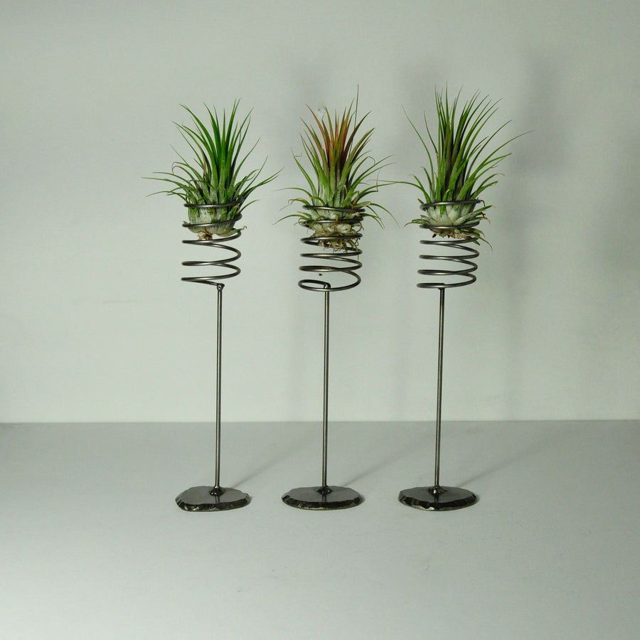 air plant ionantha rubra tillandsia metal stands spring holders