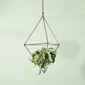 hanging plants air plant holder metal prism with tillandsia