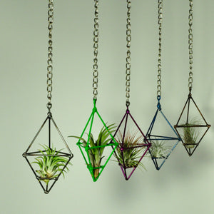 Hanging Air Plant Holder Small Prism On 2 Foot Chain Many Colors