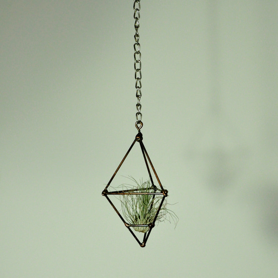 hanging air plant holder prism display metal gold tillandsia