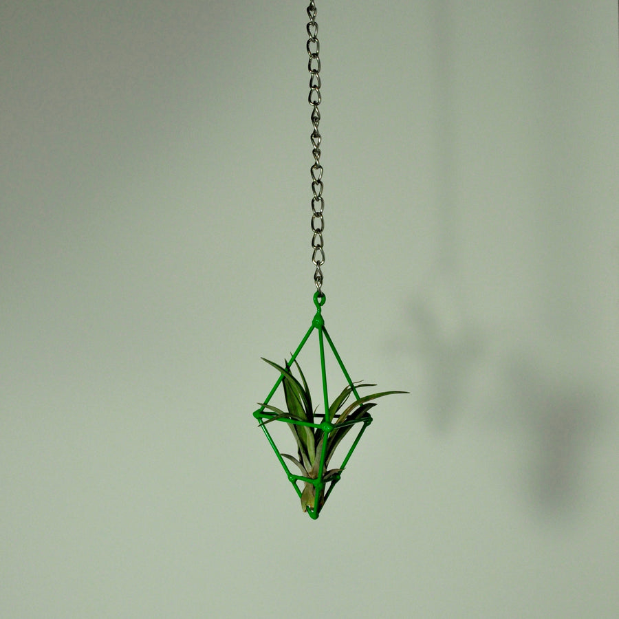 hanging air plant display holder metal green chain tillandsia