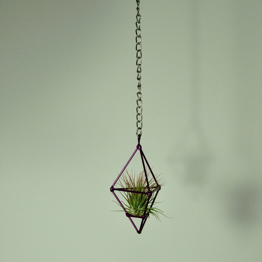hanging air plant display prism holder metal purple small chain tillandsia