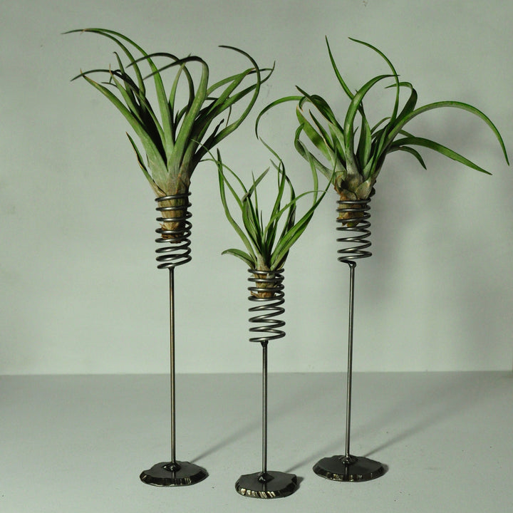 air plant-display-metal-spring