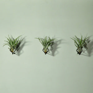 wall mounted metal air plant holder claw wall planter tillandsia display