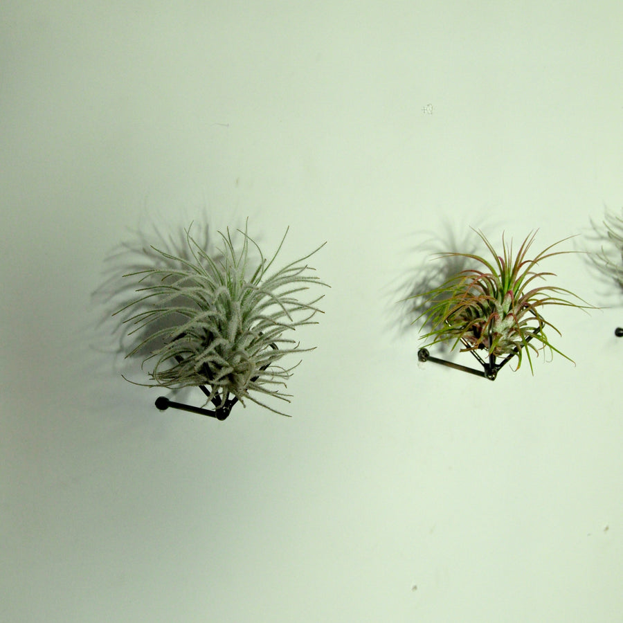 wall planters vertical garden air plant display holder tillandsia
