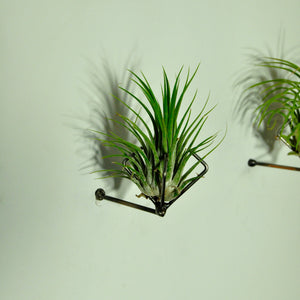living wall vertical garden air plant holder walll mounted