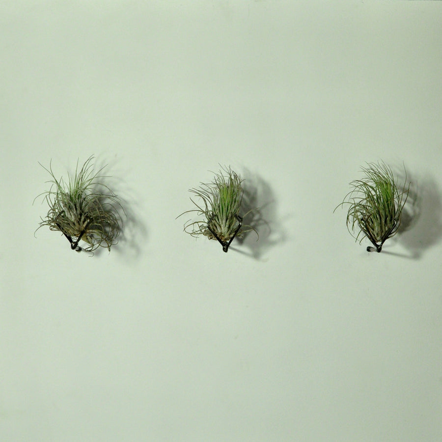 vertical garden wall mounted planters air plants