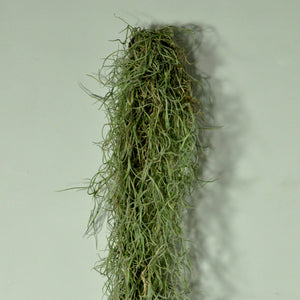 living wall planter metal air plant holder with moss