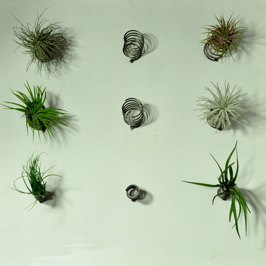 wall plant holder metal spring