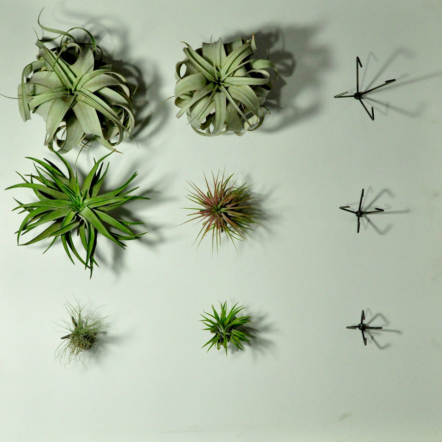 wall plant holder wall mounted planters air plants
