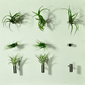 wall mounted planters air plant holder living wall