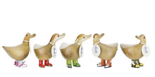 dcuk wild wellies assorted ducky