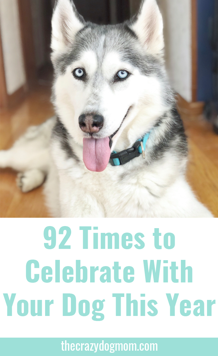 92 Strange Holidays to Celebrate with Your Dog