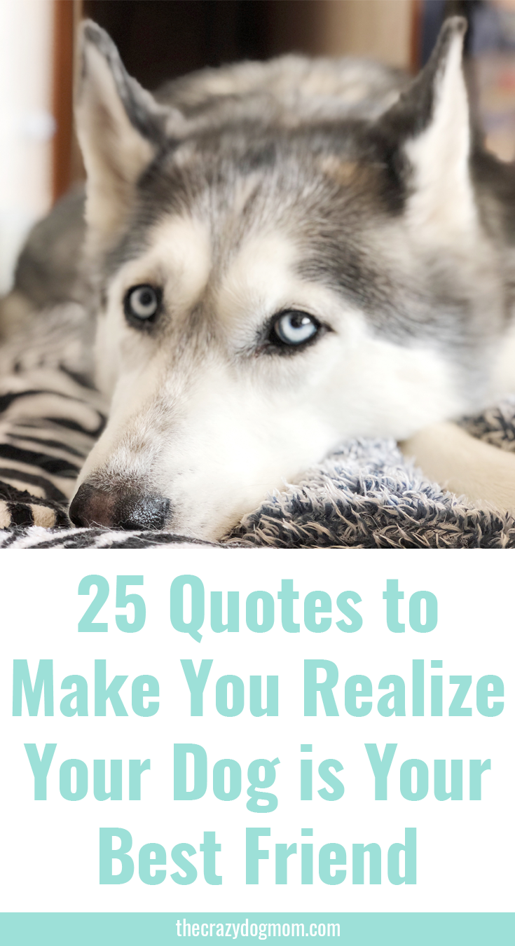 25 Quotes That Will Make Your Realize Your Dog is Your Best Friend