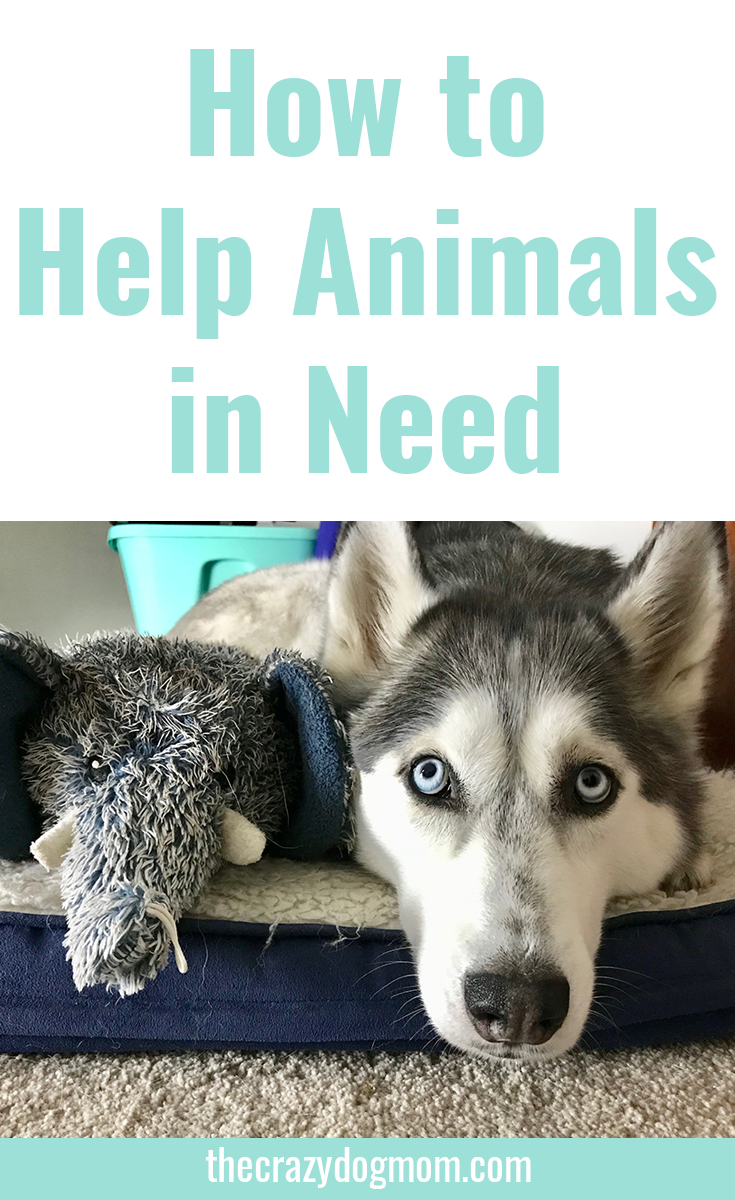 How You Can Help Animals in Need