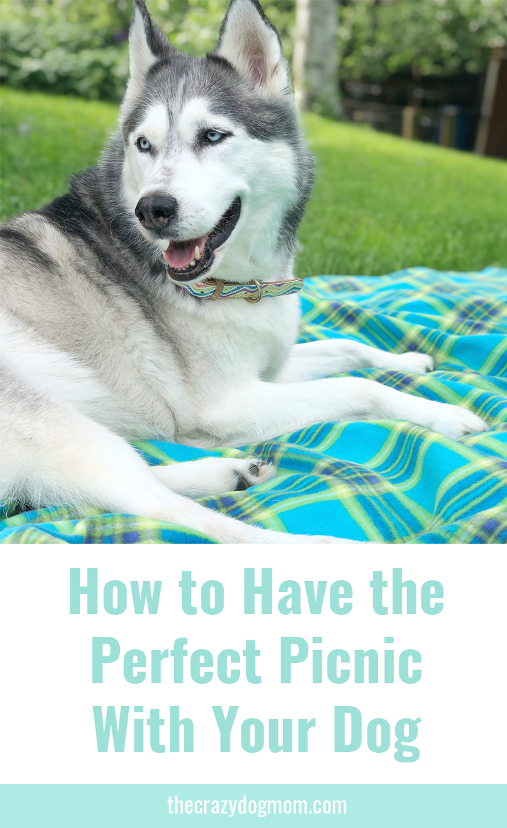 How to Have the Perfect Picnic with Your Dog