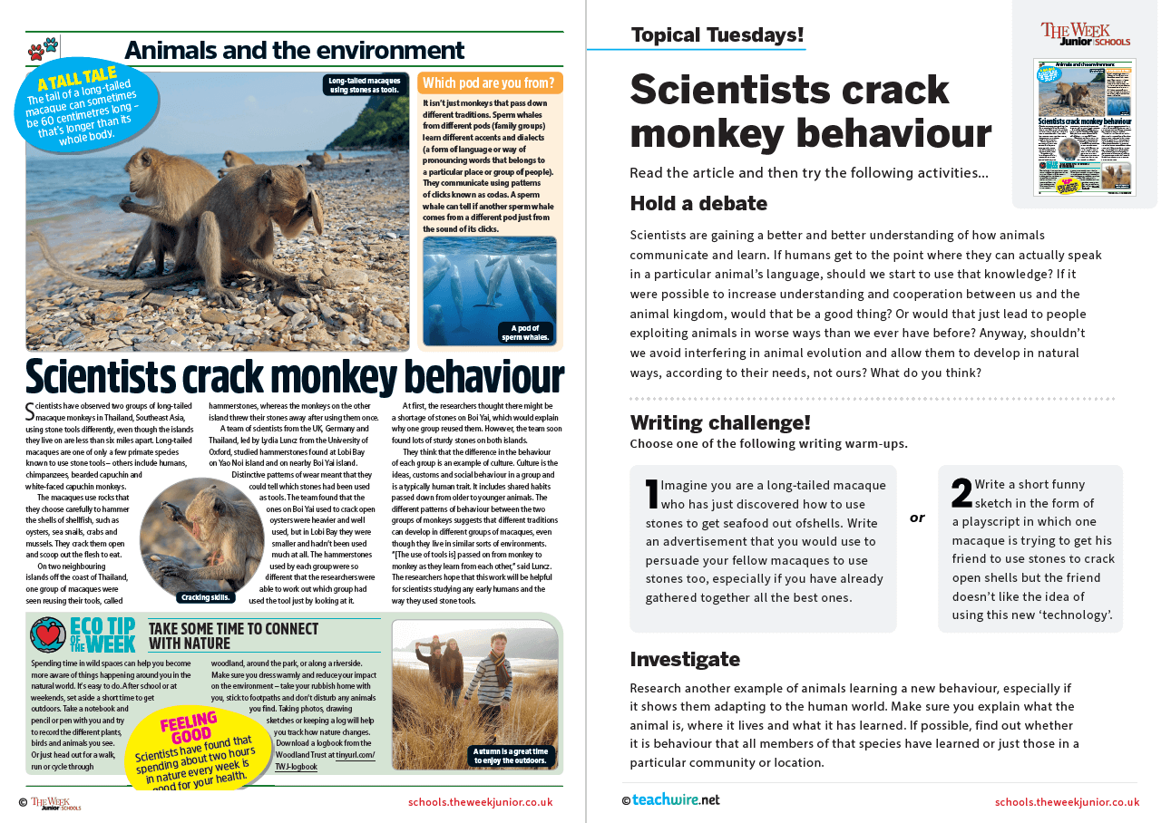 Topical Tuesdays from The Week Junior – Monkey Behaviour