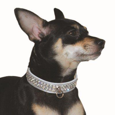 Pet Collars Celebrity Collar DOGO