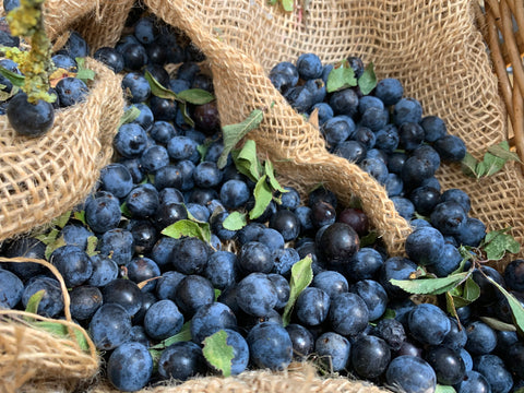 make_your_own_sloe_gin