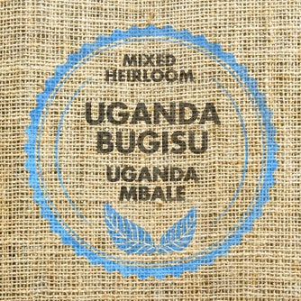 Shellback Delight - Uganda Bugisu Single-Origin (12oz Bag)