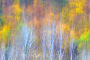 TREES between Impressionism and Abstraction Wall Pictures