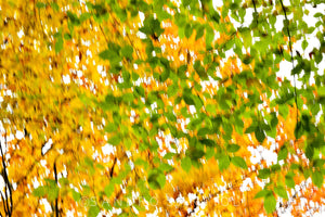 Wall Pictures  - FOLIAGE - CAN3143