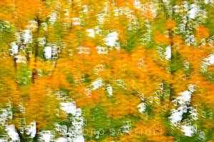 Wall Pictures  - FOLIAGE - CAN3194