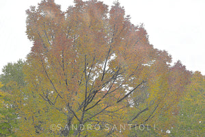 Wall Pictures  - FOLIAGE - CAN3006