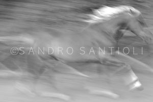 Wall Pictures - HORSES Abstract - ABC0818A