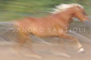 Wall Pictures - HORSES Abstract - ABC0818