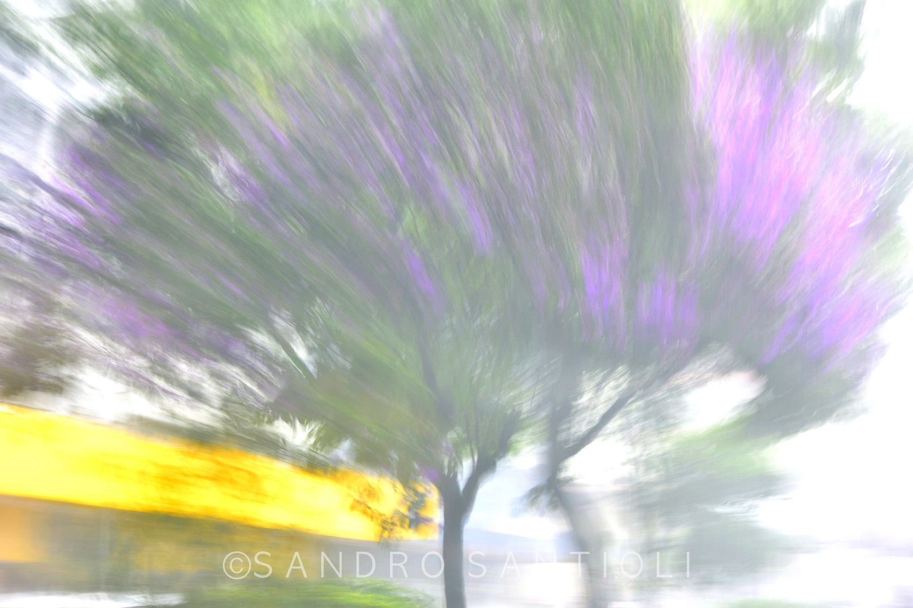 Wall Pictures -  TREES between Impressionism and Abstraction- BRA7165