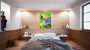 Wall Pictures - ANIMALS - BRA1244
