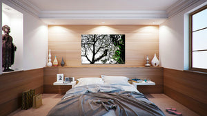 Wall Pictures -  TREES - BRA3215