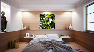 Wall Pictures - BOTANIC - BRA3233