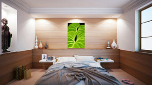 Wall Pictures - BOTANIC - TOS4970