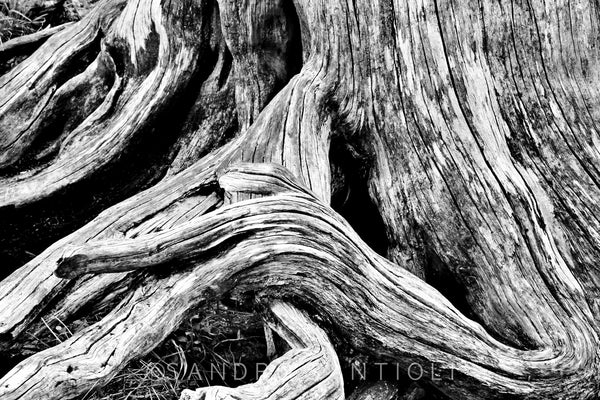 Wall Pictures - TREES B/W - DOL3851