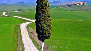 Wall Pictures - TUSCANY Landscapes - DOL7629